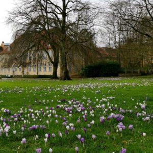 Schleswig Krokusse Frühling