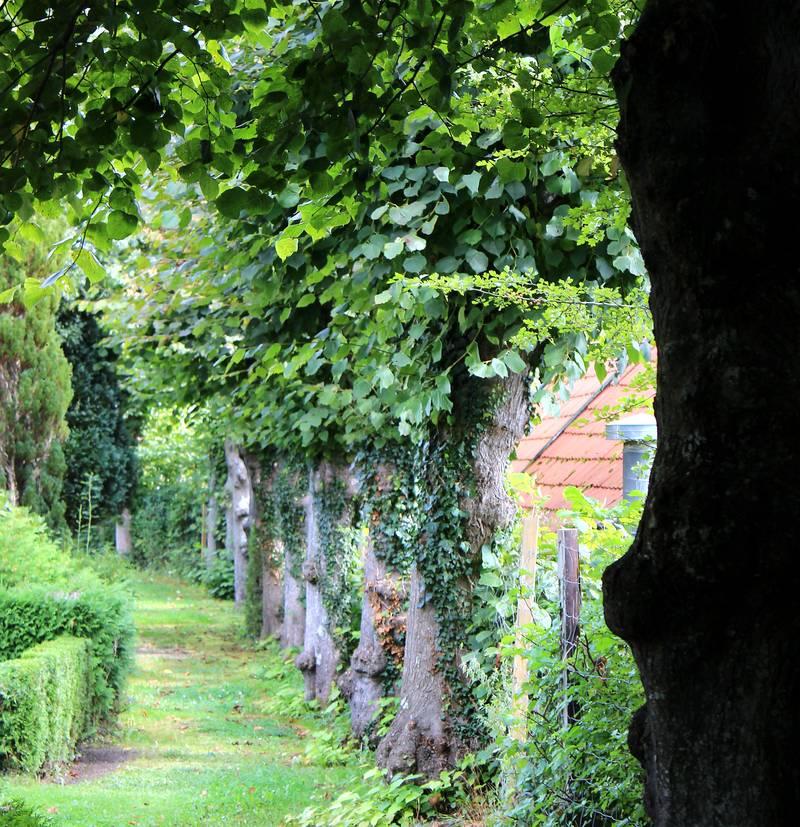 Friedhof Arnis